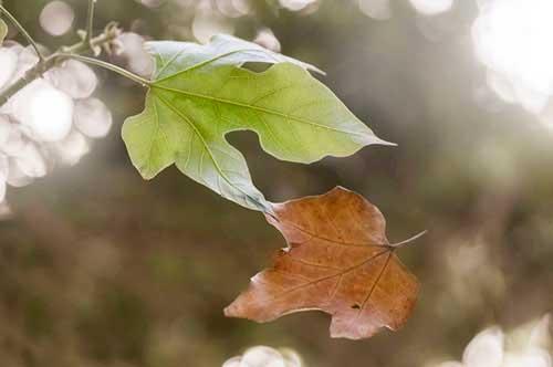 Don't Leaf