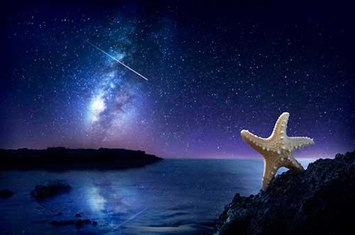 Star's Wish